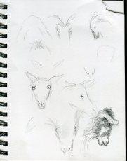 animal-scan-3092