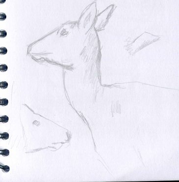 deer-sketch-blog-8