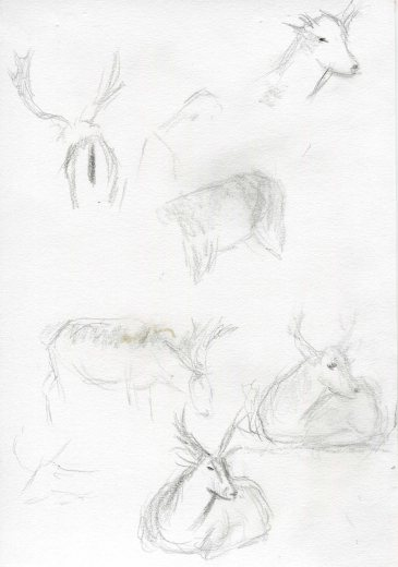 deer-sketch-blog2