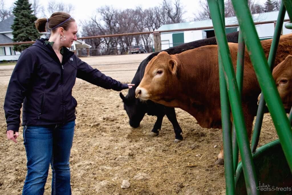 Wulfs Cattle