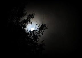 moon-morning-001