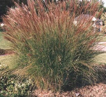 Grass - Maiden