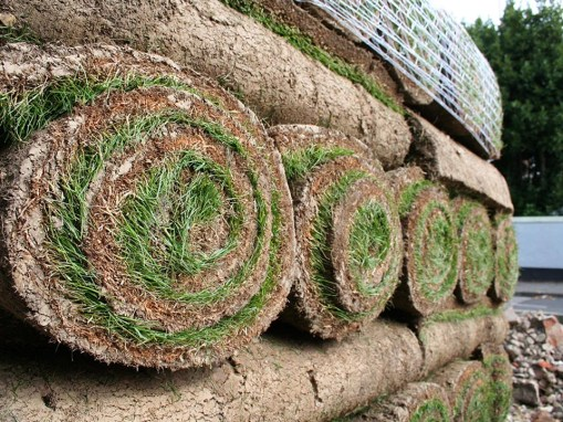 Sod Landscaping Services