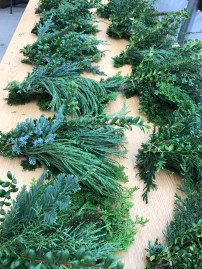 evergreen-7
