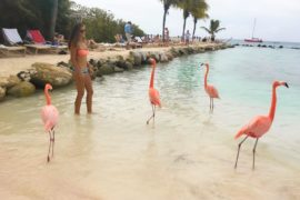 how to get to flamingo beach aruba by Julia Chubarova