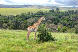 GAme Reserve Plettenberg Bay