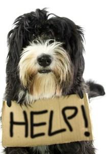 little dog ask help