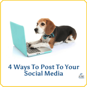 options-to-post-for-your-social-media