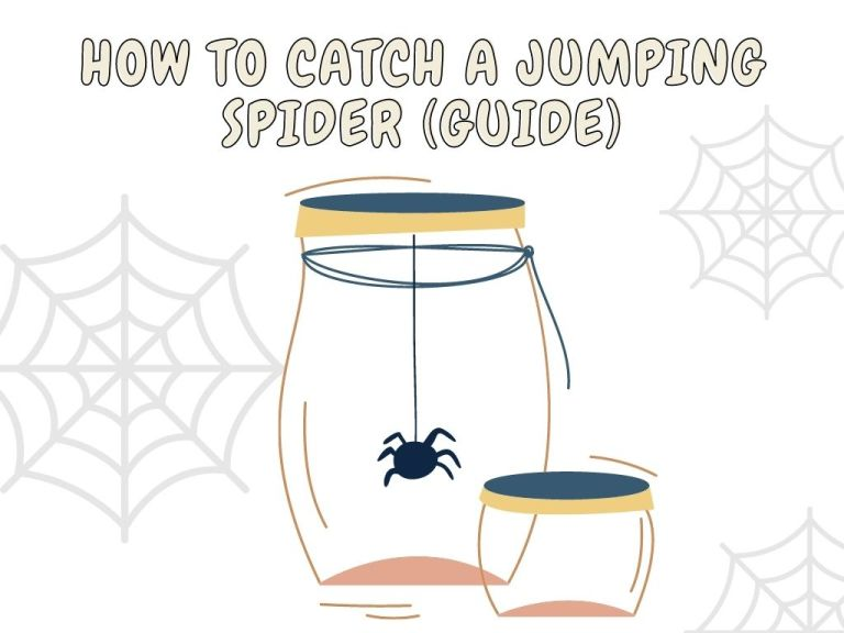 how to catch a jumping spider guide