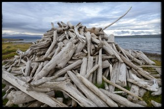 Driftwood is collected in piles along the fjörd