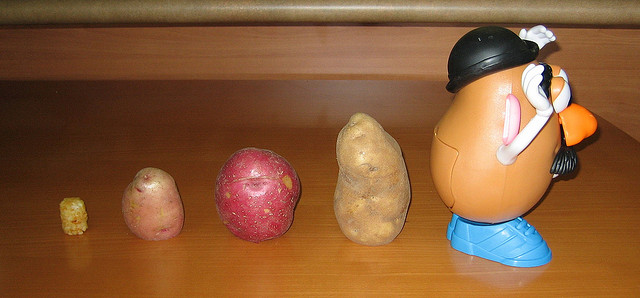 Evolution of Mr Potato Head by Babaghan