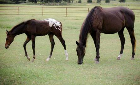 Mare with foal