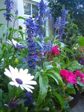 Christine's Garden 4