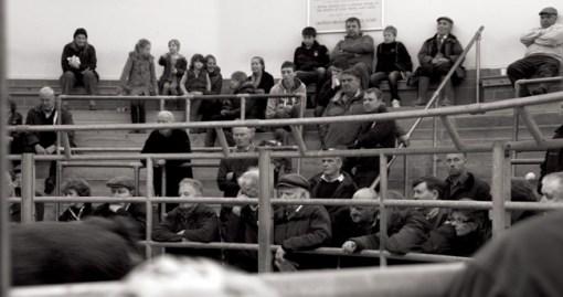 SW Livestock market