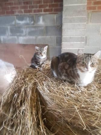 Yard Cat