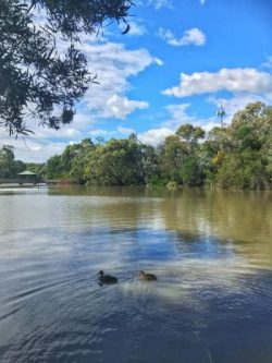 Calm enough on the surface: Ringwood Lake Park is a tranquil escape from surrounding suburbia but disenchantment with policies on the environment may play a critical part in the decision on who is sent to Canberra to represent Deakin. Photo: Emily Johnson