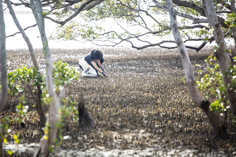 A Sea Shepherd volunteer carefully picks through aerial roots in the Nudgee Beach mangroves