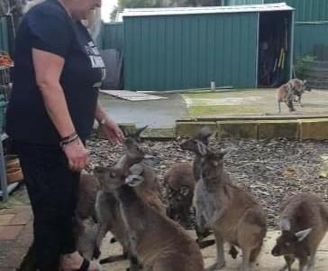 Roo Rescue founder Kim Grant rehabilitates orphaned joeys.
