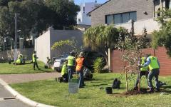 Tree change the key to tackle temperature rises