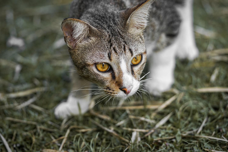 Cat bib researchers want the public's help in collar trial. Picture by: Ke Vin on Unsplash