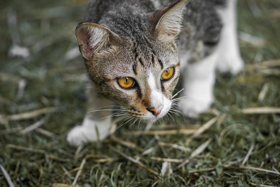 Own a cat? Researchers want help to stem hunting