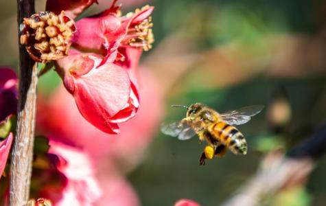 Flying under the radar: the truth about bees and food