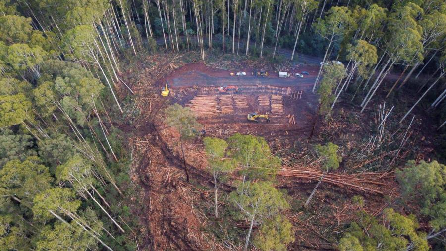 VicForests failed to manage risk to the vulnerable greater glider and critically endangered Leadbeaters possum in 26 different logging coupes, which meant the organisation could not be exempt from national legislation. Photo supplied: Protect Warburton Ranges.