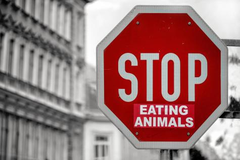 Stop Eating Animals graffiti