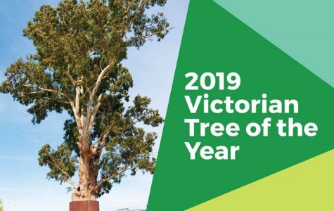 The 2019 Victorian Tree of the Year was the last survivor of a river red gum forest cut down in the 1970s.