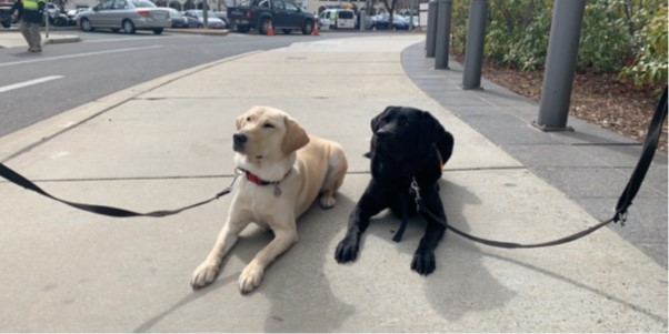 Court companion dogs Remy (left) and Quota