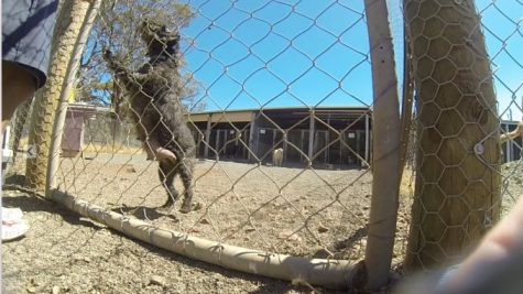 A nursing shed at a puppy farm in Victoria which has approval to come to NSW. (Source: Animal Justice Party)
