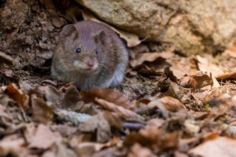 Rat poison is more effective in WA rodents.  Picture credit:Photo by Zdeněk Macháček on Unsplash