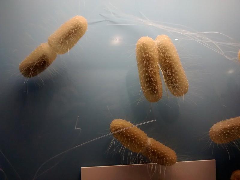 Bacteria. Photo: Peter Handke (CC0 1.0)