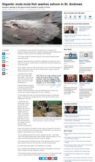 Gigantic mola mola fish washes ashore in St. Andrews - New Brunswick - CBC News.clipular