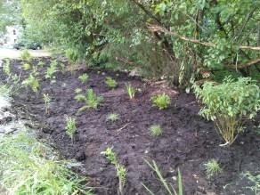 Photo 3. Planted rain garden