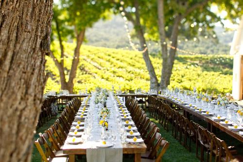 Elegant And Rustic Wedding At HammerSky Vineyard