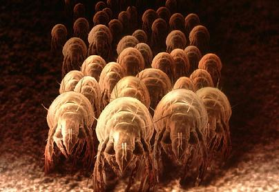 Be Aware and Beware of Dust Mites | June's Journal