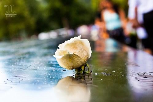 Diese Rose steckte in einem der nahezu 3.000 Namen, derer im 9-11-Memorial gedacht wird. http://junghahn24.com/mit-der-u-bahn-raus-zu-fuss-wieder-rein-brooklyn-bridge/