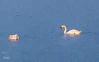 Am Haus in West Yarmouth konnte ich wieder das Leben am, auf und im See beobachten.
