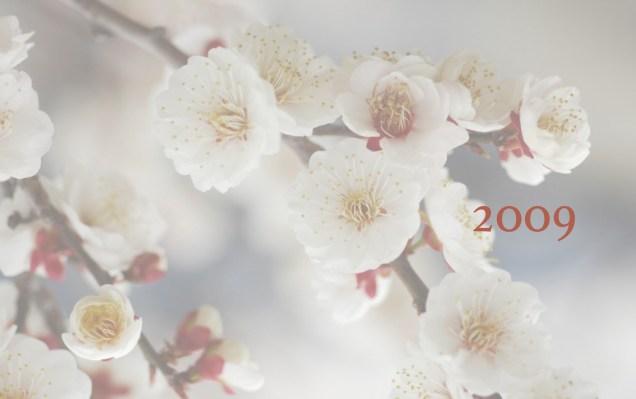 JIW 2009 3 Blossoms White.jpg