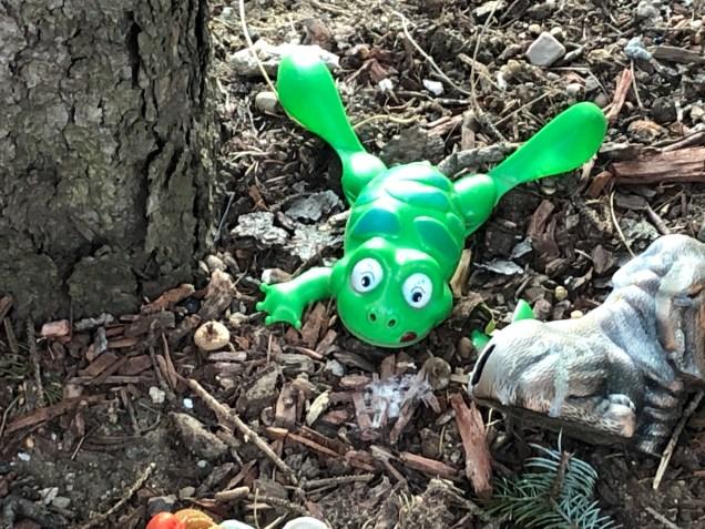 2019 Frog Encounters Fan 13 1.JPG