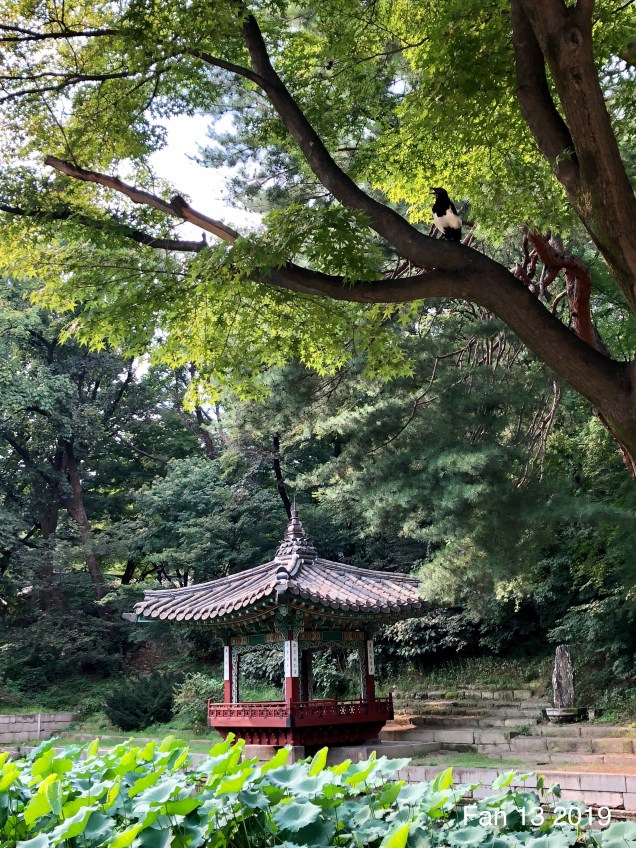 2019 Changdeokgung Palace by Fan 13. 17