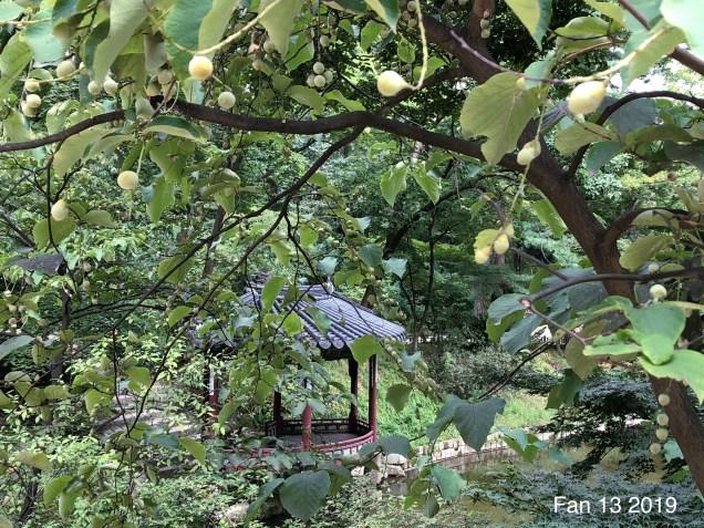 2019 Changdeokgung Palace by Fan 13. 7