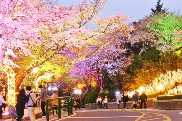Cherry Blossom N Seoul Tower Myeong-domg.org. 2.jpg