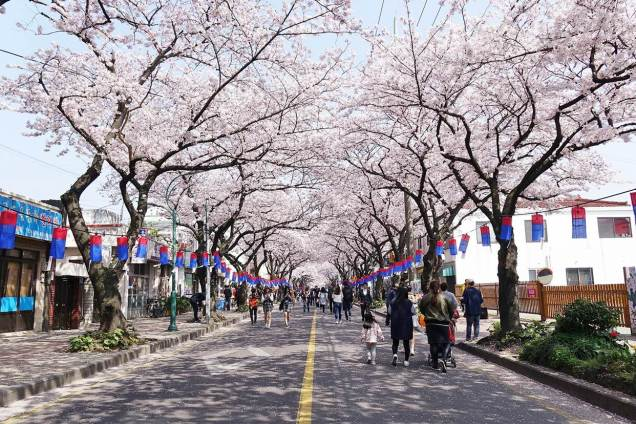 Cherry Blossoms in Jeju Cr.Visit Jeju.com .jpg