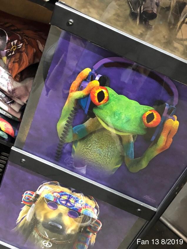 2019 8 Frog Encounters in NYC. Fan 13. 6
