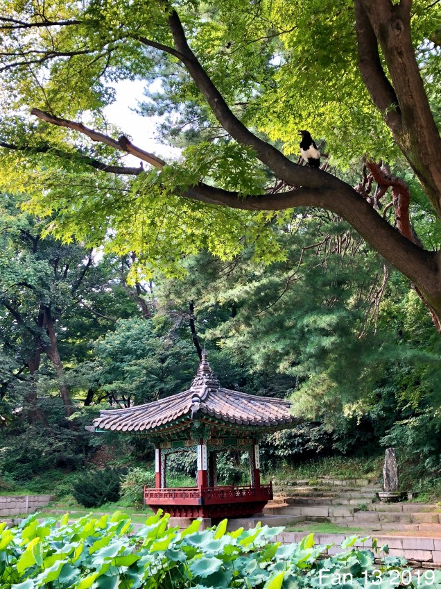Changdeokgung Palace. Photos by Fan 13, www.jungilwoodelights.com. 2019 63