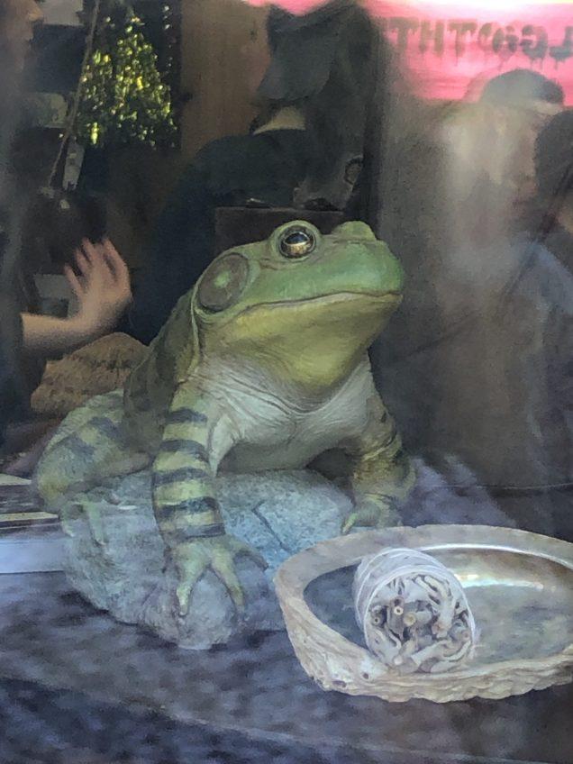 2019 10 19-2 JIW's Fan 13 Frog Encounter