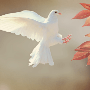 Mindfulness for better sleep. Dove hovering in the air over some autumn leaves.