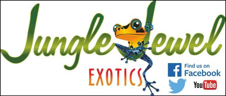 Jungle Jewel Exotics 2016 Spring Reptile Expo Schedule